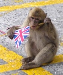 Monkeys are known to have monarchist sympathies